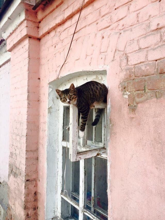 Vite passe moi l'échelle!!!!