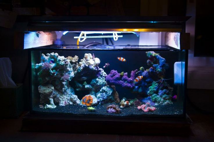 Reef tank with black sand reef tanks pinterest black for Black sand fish tank