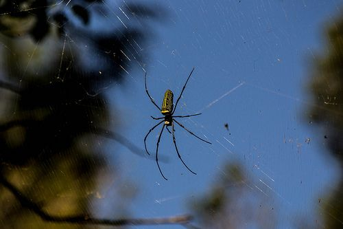 7 best images about home safety on pinterest seasons for How to keep spiders out of the house