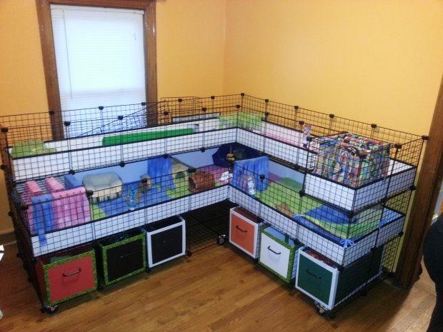 DIY Guinea Pig Cage Ideas