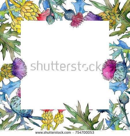 Stock Photo: Wildflower thistle flower frame in a watercolor style. Full name of the plant: thistle. Aquarelle wild flower for background, texture, wrapper pattern, frame or border. -
