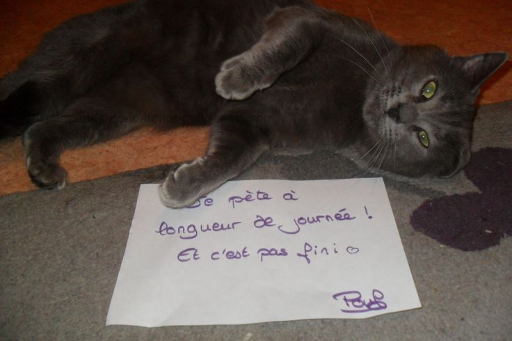 « I fart all day long ! And it's not over <3″ #lolcats #shameyourpet #shameyourcat #cat #cats #chats