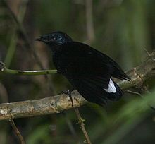 There are 57 species of birds in Fiji, and as stated 26 are endemic.