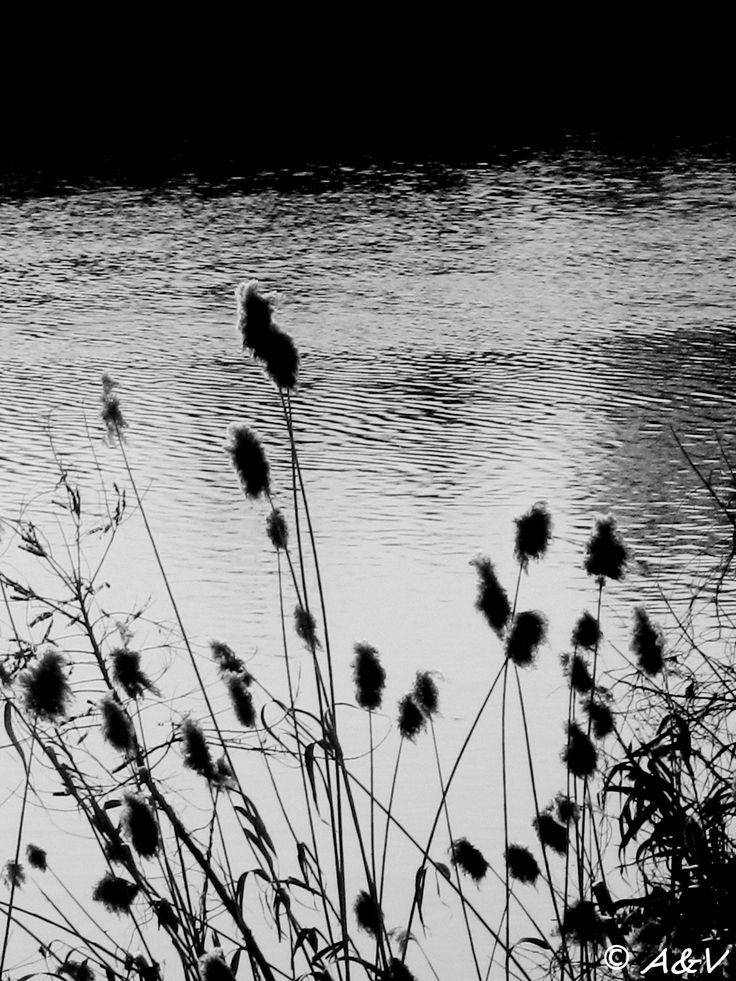 Dolci e fredde acque. A&V ©2013