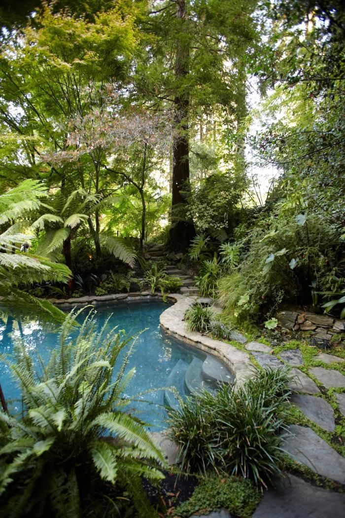 2160 best landscape backyards outdoor living images on for Tropical pool gardens