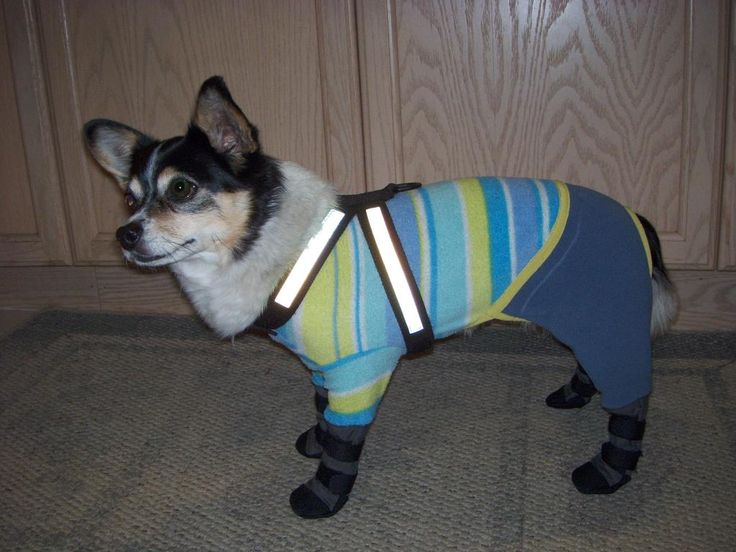 Fleece snowsuit with boots attached - Chihuahua Forum : Chihuahua Breed Dog Forums