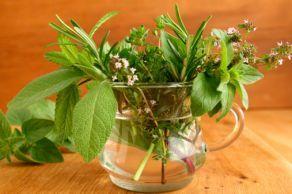 Planten en kruiden die de vertering bevorderen