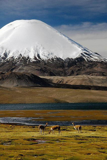 "Top Tourist Attraction  It is called Lauca National Park.  Location- far North of Chile Andean range  Features of the Park  - the ""beautiful Lago Chungará,"" which is the world's highest lakes.  - Volcano ""looms over"" and is a perfect cone. Volcán Parinacota"