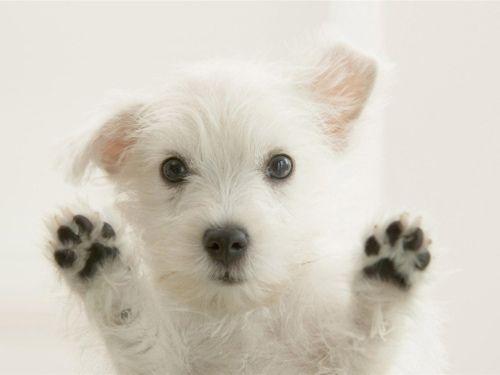 søte hunder - Google Search
