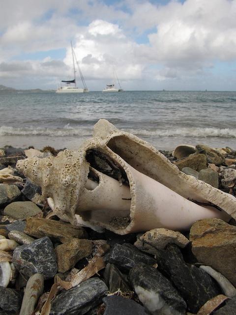 Seashell: Sea Shells, Veggies Burgers, Shells Κοχυλια, On The Beach, Painting, Sell Seashells