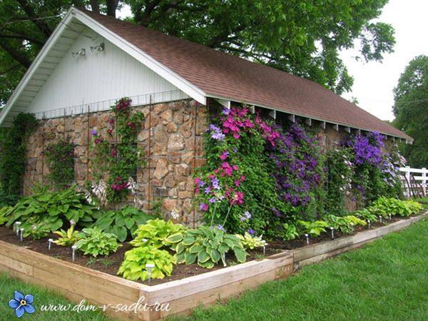 Какие цветы посадить в тени. 15 названий цветов, которые любят тень. | Красивый Дом и Сад