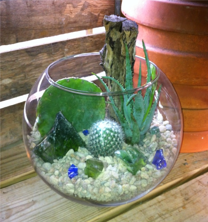 Large Terrarium Cactus Succulent Inside My Greenhouse