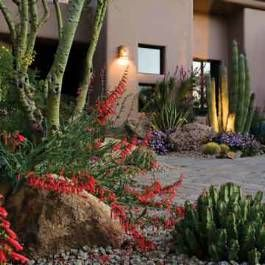 Colorful Desert Garden - Phoenix Home & Garden