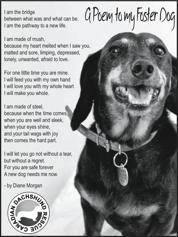 A very touching poem written from the perspective of a foster mom to her foster dog. Such a rewarding experience, one you will never forget.