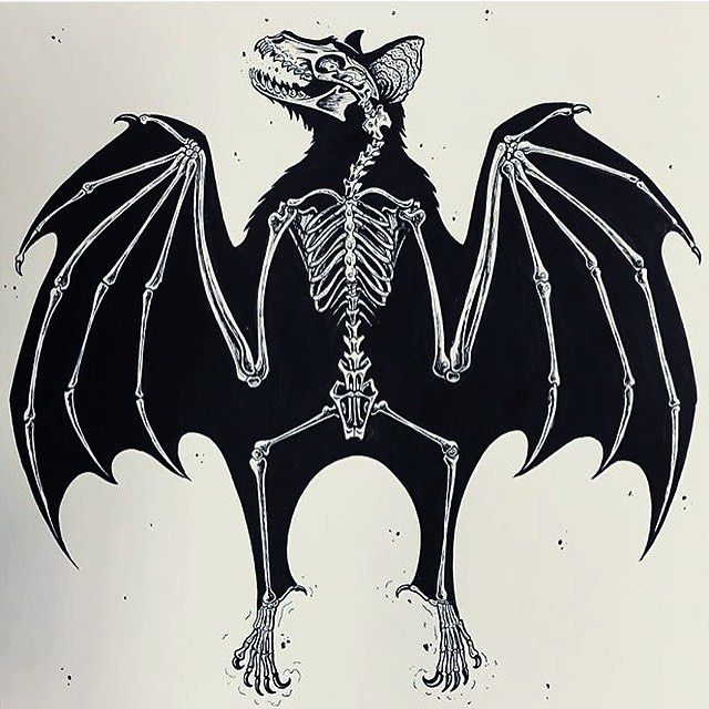 Bat skeleton drawing - photo#8