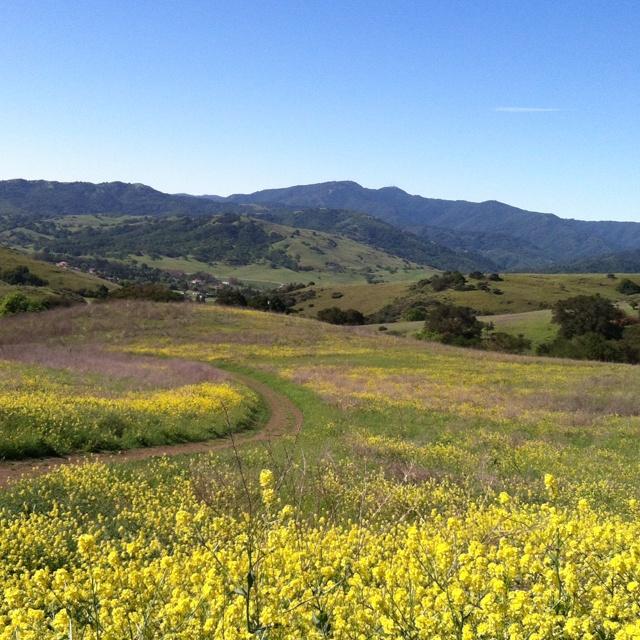 Hills of South San Jose, California
