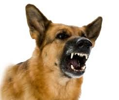 Image result for when the dog bites
