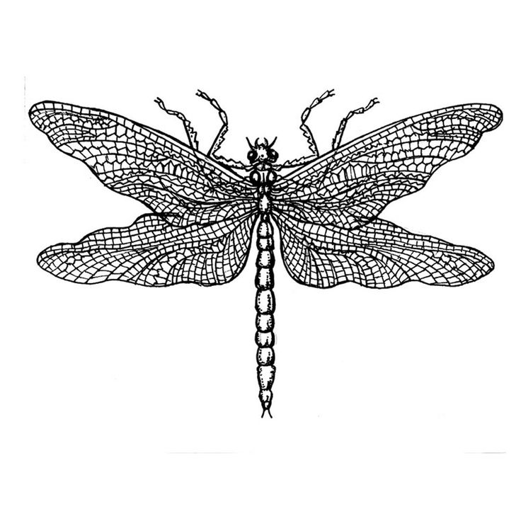 'Dragonfly Drawing' Art Rubber Stamp, x - Crafty Individuals from Crafty  Individuals UK