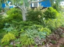 love the layering: Gardens Ideas, Landscape Design Pictures, Perennials Gardens, Front Yard, Traditional Landscape, Trees Design, Ferns Forests, Gardens Design, Shades Gardens