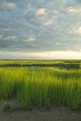 salt marsh                                                                                                                                                     More