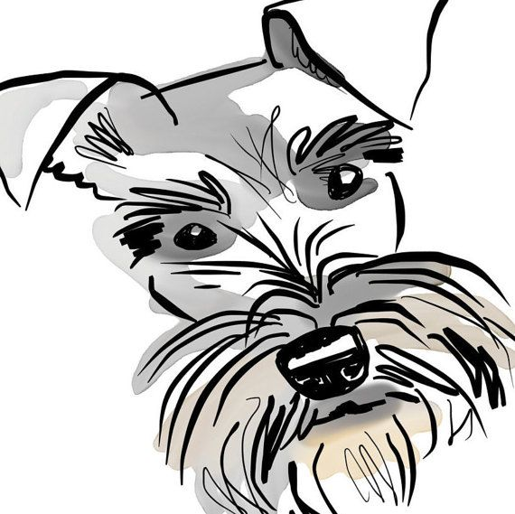 A characterful hand drawn Schnauzer Art print Perfect as a gift for a Schnauzer lover. Just one of my range of illustrations celebrating the wonderful world of different dog breeds. This print can also be personalised with your choice of words for a small extra charge. A beautiful loose pen, ink and watercolour style illustration of a bright eyed Miniature Schnauzer.  Below the image is a list of this gorgeous dogs fabulous temperament traits... ...Spirited, Alert, Obedient, Friendly…