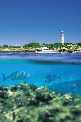 Rottnest Island #Australia