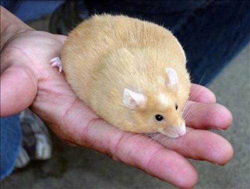 18 Very Fat Animals   SMOSH