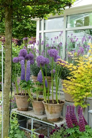 Alliums...lupine, oh my my...can't wait to see my garden this spring! Planted a TON of each of these!!