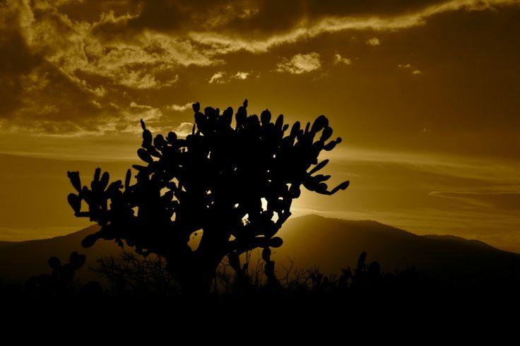 Cactus by R. Josue Marrero - #MahCualliOhtli desea #quetevayabien , consume #nopal , #LoQueAmoDeMéxico