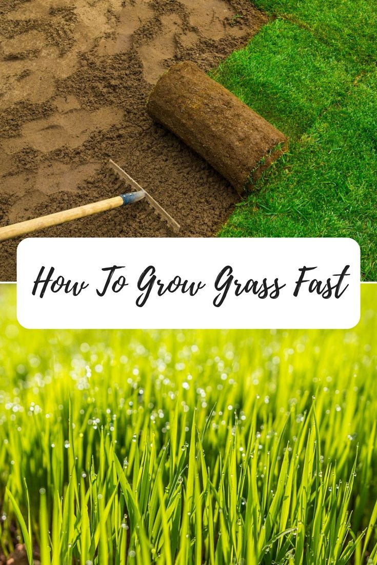 How To Grow Grass Fast Grow Grass Fast Growing Grass Lawn Care