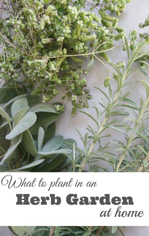 106 best indoor gardens images on pinterest gardening herbs garden and herb gardening. Black Bedroom Furniture Sets. Home Design Ideas