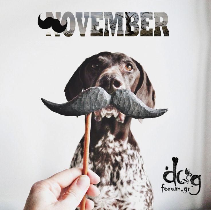 #movember #dog #σκύλος #μουστάκι