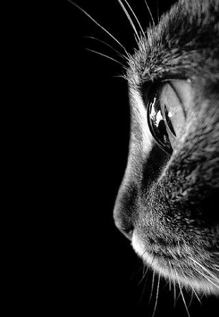 Chat #Photographie #Macro