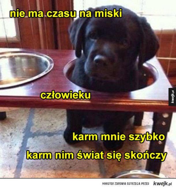 karm natentychmiast #kwejk #humor #piesel