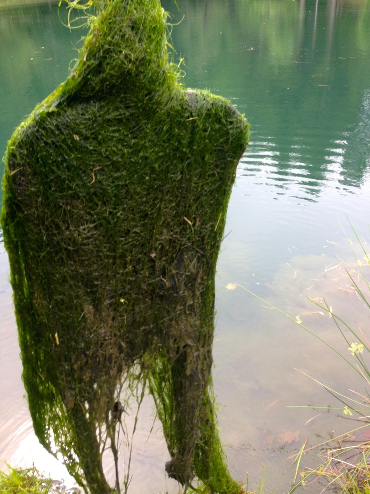 The 25 best pond weed ideas on pinterest diy waterfall for Farm pond maintenance