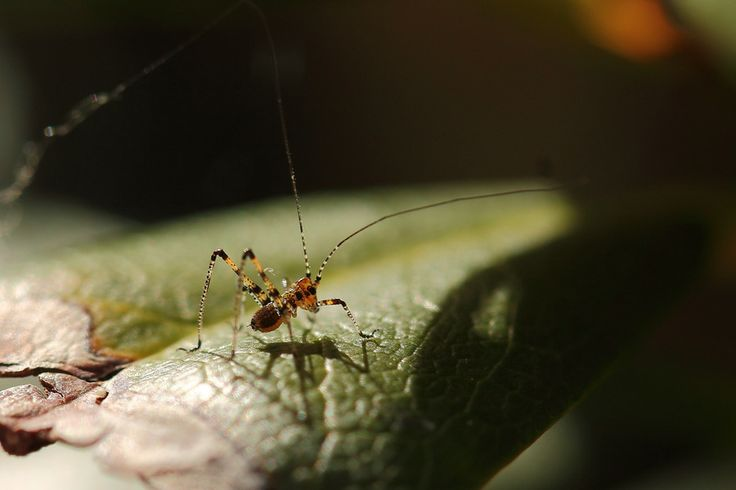 Newborn cricket... by Pierre Anex on 500px