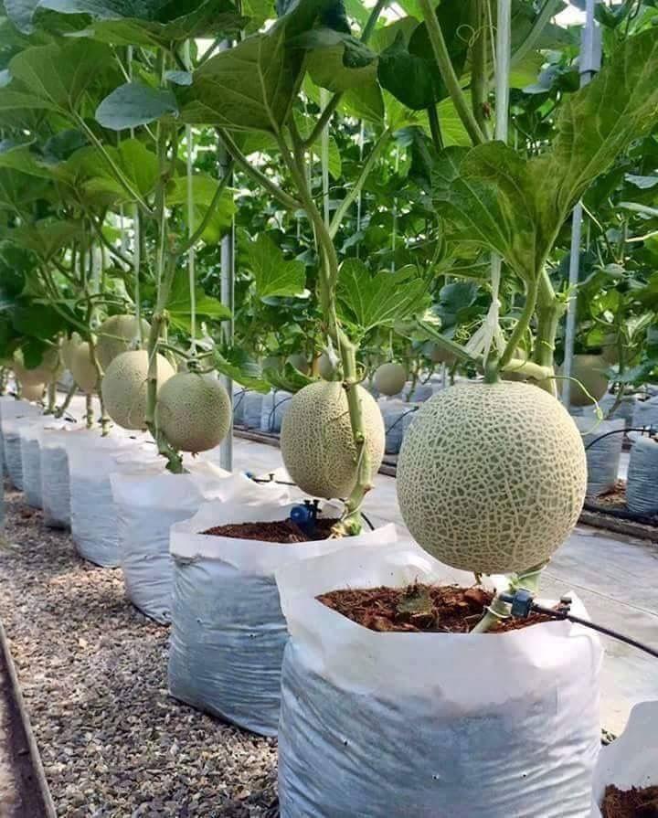 5 Vertical Vegetable Garden Ideas For Beginners: DIY Gardening For The Beginner In 2020