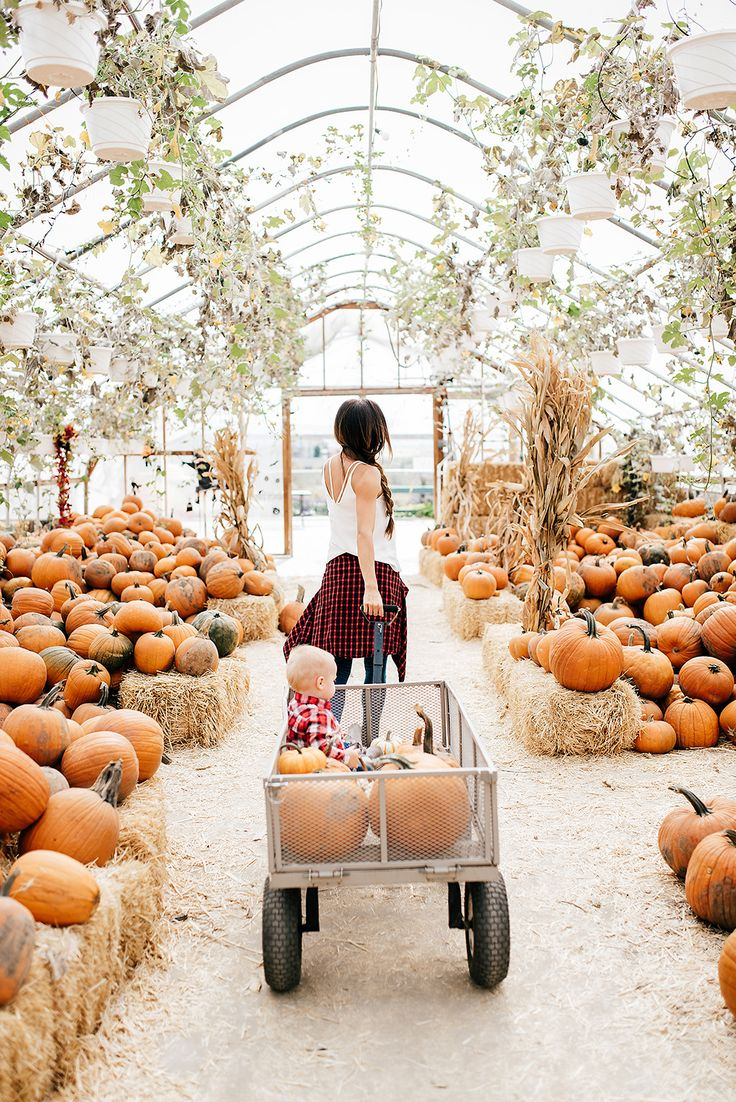 MUST HAVES FOR YOUR PUNKIN' Pumpkin patch pictures