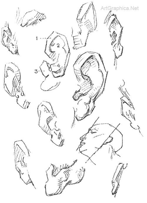 best 25  ear anatomy ideas on pinterest