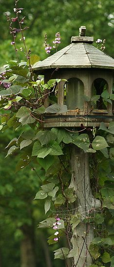 Hyacinth bean vine climbing up anything.  Vine so beautiful with purple flowers that turn into purple pods