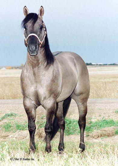 Quick Silver Quarter Horse mare