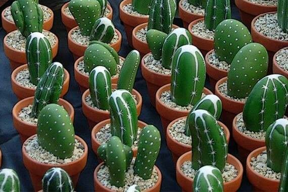 Painted cactus rocks. Indoor or outdoor can't kill these.