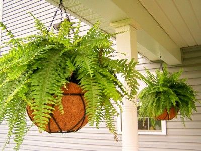 Line hanging baskets with garbage bag to keep moisture in longer - from A Soft Place to Land
