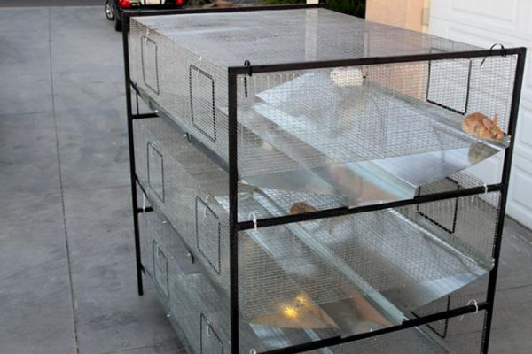 26 Best Images About Rabbits On Pinterest Rabbit Cages