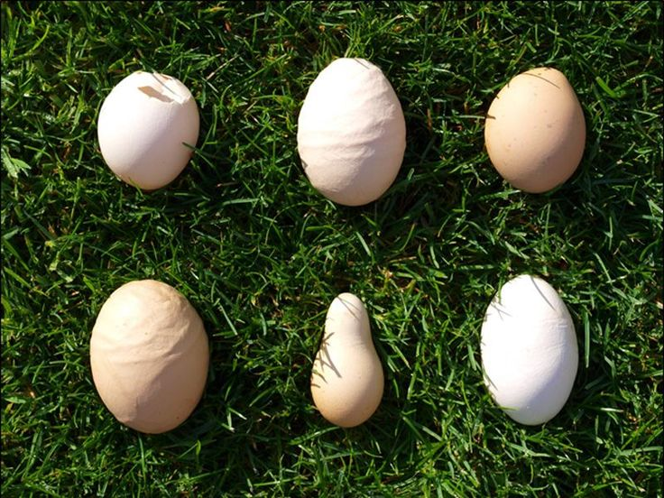 Eggshell Quality ~ There are a number of causes of pale/poorly shelled eggs: 1.Respiratory Diseases 2.Bright sunlight can cause pale shelled eggs. Keeping birds enclosed for several days can reverse this.3.Laying cycles -  4.Calcium or vitamin D3 deficiency If the birds are on a good diet w/ crushed oyster shell they should not have diet related egg shell problems. However, if you suspect that this is the problem then you can supplement 5.Stress6.Genetics - bear in mind that