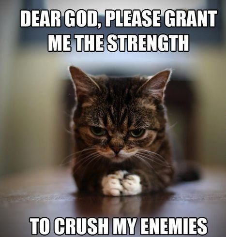 Cat Memes – 25 Cute and Funny Cat Memes | Badass Memes.Com