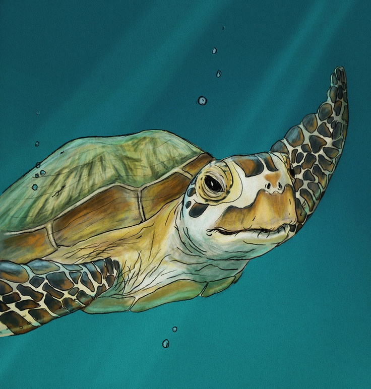 Beautiful Sea Turtle Painting                                                                                                                                                                                 More