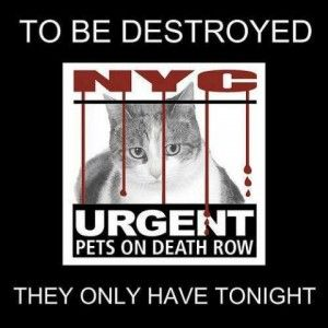 Cats To Be Destroyed