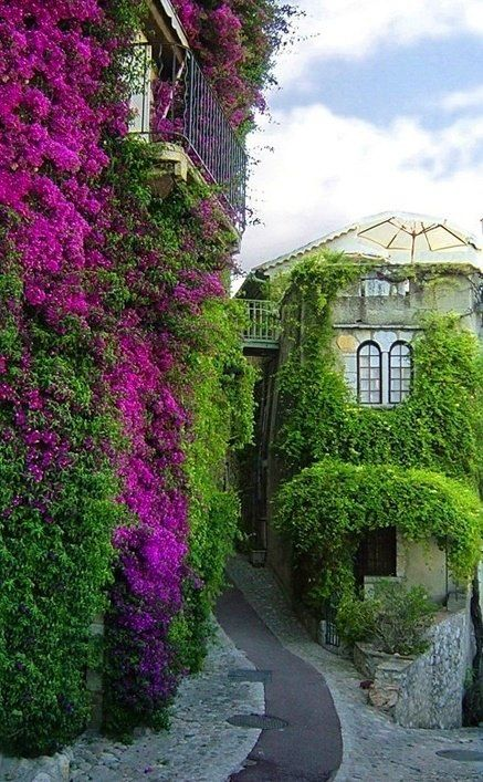 Lush gardens: To Sell, Paul De, Saint Paul, Flowers Plants, Glasses Wall, Blue Houses, France, St. Paul, Wall Gardens