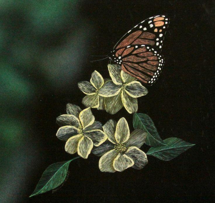 Butterfly scratchboard - photo#16
